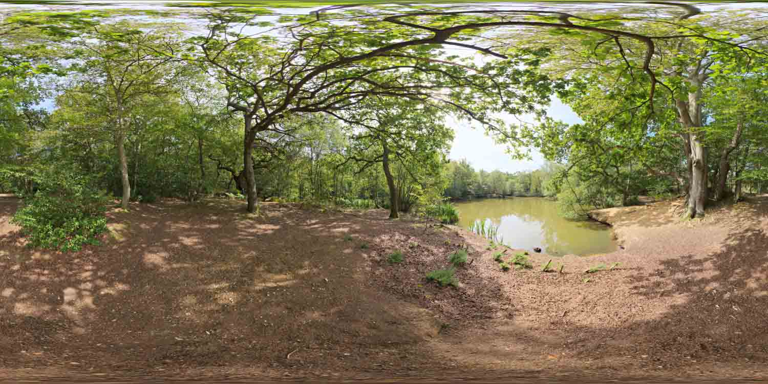 Epping Forest 01 HDRI