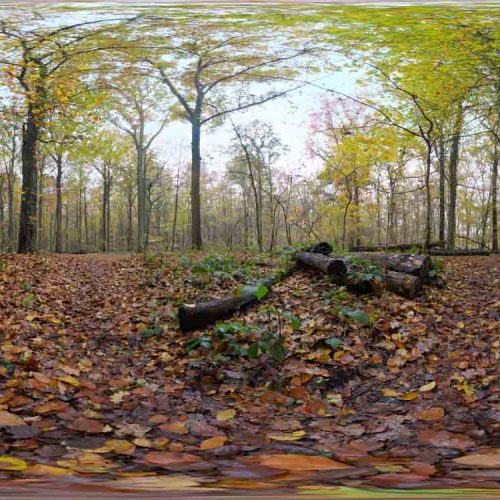Autumn Ground HDRI